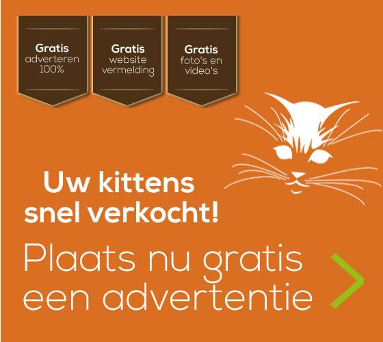 Kittens verkopen