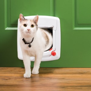 kat door kattenluikje