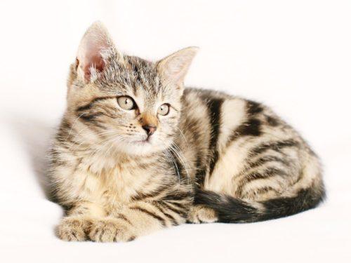 wat is een kattenverzekering