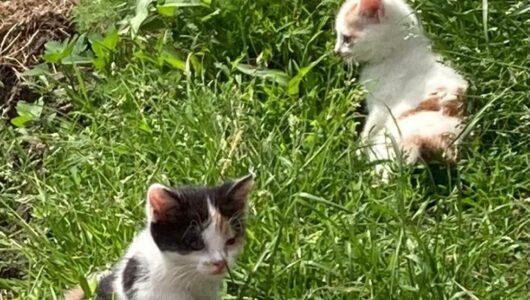 De twee kittens samen